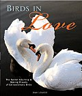 Birds in Love The Secret Courting & Mating Rituals of Extraordinary Birds