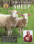 How to Raise Sheep: Everything You Need to Know