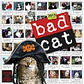 Bad Cat Calendar Cover