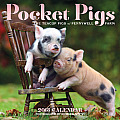 Pocket Pigs Calendar: The Teacup Pigs of Pennywell Farm Cover