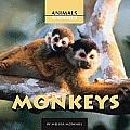 Monkeys (Animals, Animals)