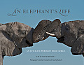 An Elephant's Life: An Intimate Portrait from Africa