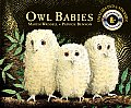 Owl Babies with DVD