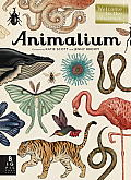 Animalium Welcome to the Museum