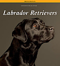 Labrador Retrievers (Breed Profiles)