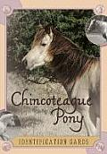 Chincoteague Pony Identification Cards: Set 2