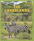 The Grasslands: Discover This Wide Open Biome
