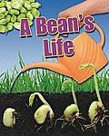 A Bean's Life