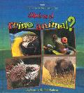 Que Es el Reino Animal? / What Is the Animal Kingdom? (Ciencia de los Seres Vivos) Cover