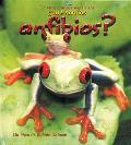 Que Son los Anfibios?