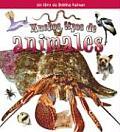 Muchos Tipos De Animales