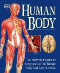 Human Body An Illustrated Guide To Every Part Of The Human Body & How It Works