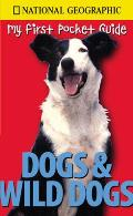 My First Pocket Guide Dog & Wild Dogs
