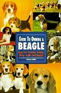 Guide To Owning A Beagle