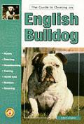 Guide To Owning An English Bulldog