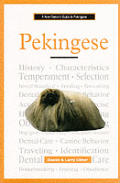 New Owners Guide To Pekingese