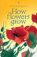 How Flowers Grow Usborne Beginner Intern