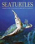 Sea Turtles A Complete Guide to Their Biology Behavior & Conservation