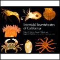 Intertidal Invertebrates of California