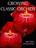 Growing Classic Orchids