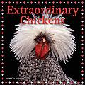 Cal09 Extraordinary Chickens
