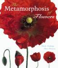 Metamorphosis Of Flowers
