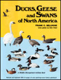 Ducks Geese Swans Of North America