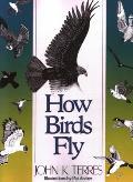 How Birds Fly