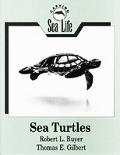 Carving Sea Life Sea Turtles