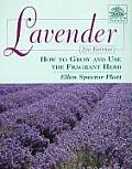 Lavender How to Grow & Use the Fragrant Herb