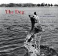 Dog 100 Years Of Classic Photography