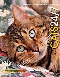 Cats 24/7