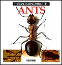Fascinating World Of Ants
