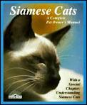Siamese Cats Everything About Acquisit