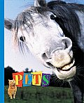 Pets: Cats, Dogs, Horses, & Camels, Too!