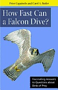 How Fast Can A Falcon Dive?