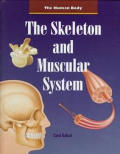 The Skeleton and Muscular System (Human Body)