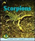 Scorpions (Early Bird Nature)