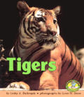 Tigers (Early Bird Nature)