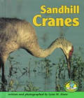 Sandhill Cranes (Early Bird Nature)