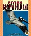 Flying Brown Pelicans Pull Ahead