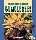 Buzzing Bumblebees (Pull Ahead Books)