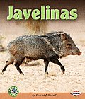 Javelinas (Early Bird Nature)