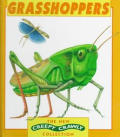 Grasshoppers (New Creepy Crawly Collection)