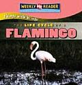 The Life Cycle of a Flamingo