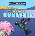 The Life Cycle of a Hummingbird