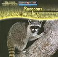 Raccoons Are Night Animals/ Los Mapaches Son Animales Nocturnos (Night Animals/Animales Nocturnos)
