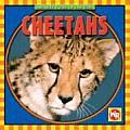 Cheetahs (Animals I See at the Zoo)