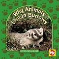 Why Animals Live in Burrows