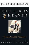 Birds Of Heaven Travels With Cranes